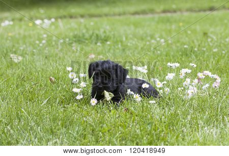 puppy and flowers