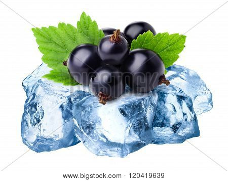 Frozen Blackcurrants Isolated