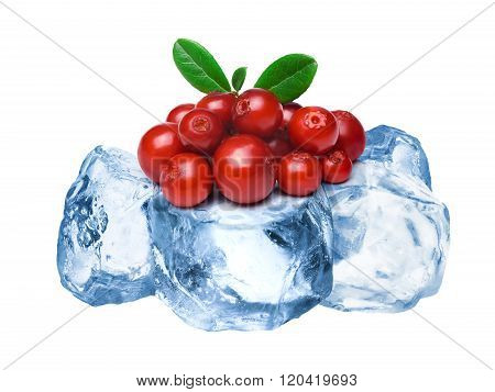 Frozen Lingonberries Isolated