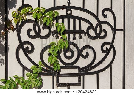 Black Wrought-iron Grille And Ivy Branch. Architecture
