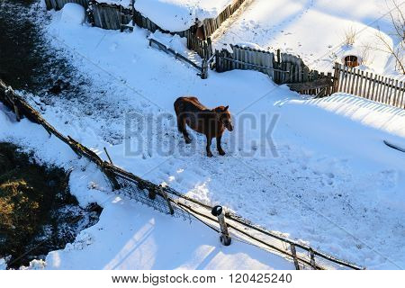 A horse on a rural yard. The view from the heights