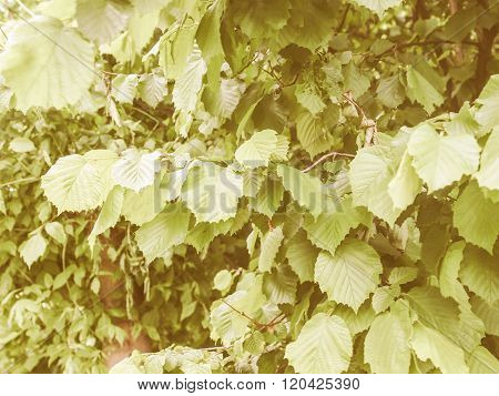 Retro Looking Hazel Tree Leaf
