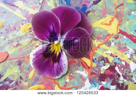 Purple Heartsease  On A Picturesque  Background With Spray Paint