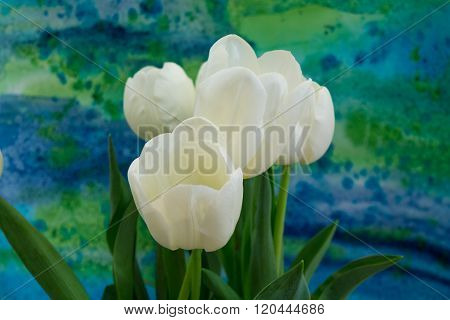 White Tulips On The Bright Background