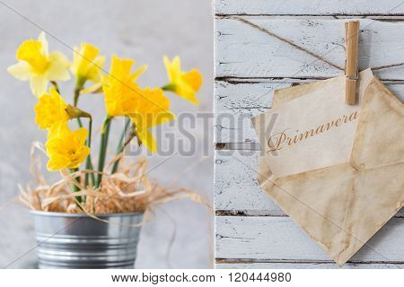Daffodils - Beautiful Sign Of Spring