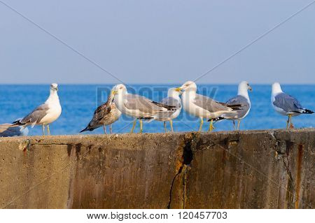 A Flock Of Seagulls On The Breakwater.