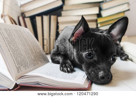 Black dog reading book in library