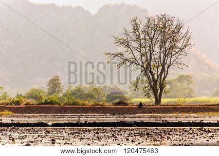 Rural rice field landscape in kanchanaburi province, Thailand