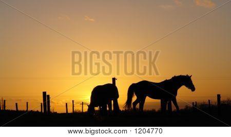 Backlit Horse Sunset