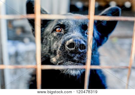 Barking dog behind the fence