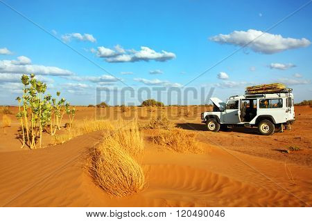 MOROCCO - OCTOBER 27, 2015 : Safari in Sahara Desert, Morocco, Africa