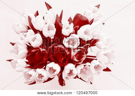 Isolated Bouquet Flowers From Tulips Of Claret Tone