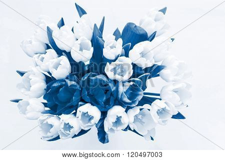 Isolated Bouquet Flowers From Tulips Of Blue Tone