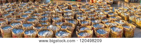 The basket anchovy fishing achievements of fishermen