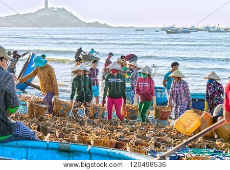 Women groups struggling carry fish to coastline