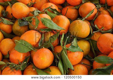 Orange Tangerine Fruit