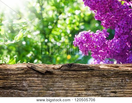 Lilac Behind Wooden Board