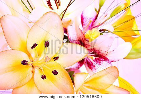 Bunch Of Lily Flowers Closes Up With Light Background