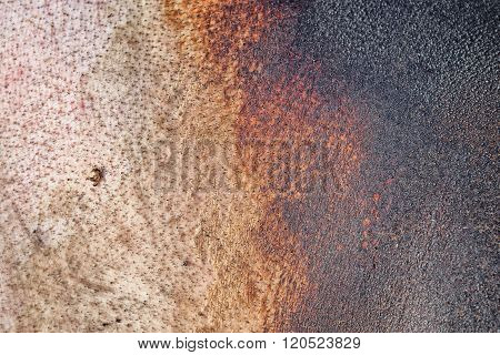 Pig Skin Background, Texture Of Skin Roasted Pig