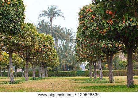 Park With Orange Trees
