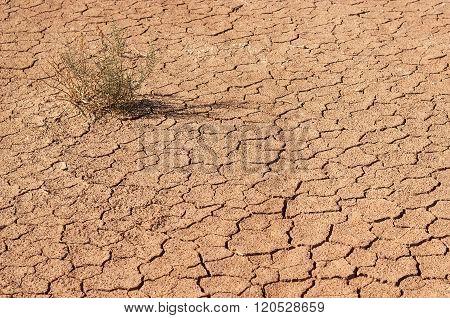 Dry Land In A Desert