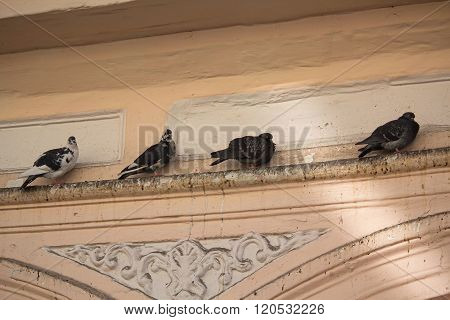 Pigeons sitting on the ledge of an old building. Birds