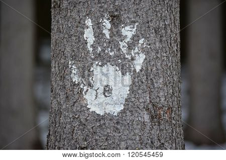 Imprint Of Human Hand On The Bark Of A Tree, South Bohemia