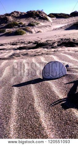 Sand Dollars at the Beach