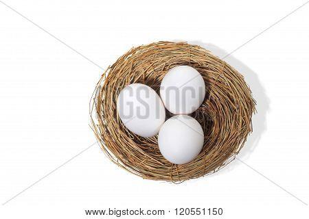 Three Eggs In Bird Nest