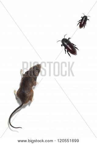 Portrait Of A Mouse And Two Cockroaches