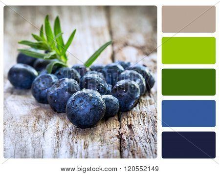 Colour Palette Swatch