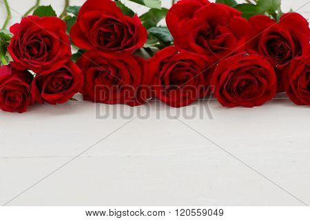 Rose. Red roses. Bouquet of red roses. Several roses on white background.
