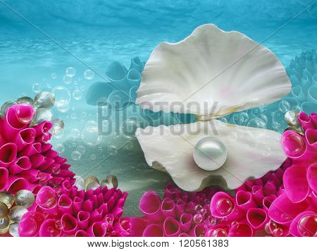 Pearly Shell Coral Water Background