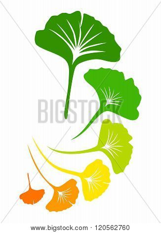 Vector Ginkgo biloba Leaf Arrangement Background Pattern Illustration
