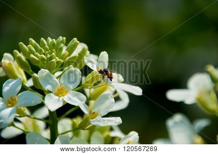 Small Bee and flower.