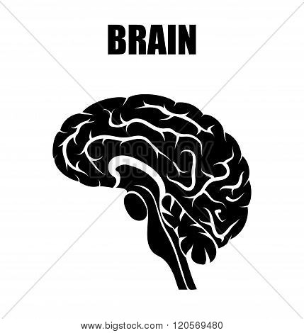 ILLUSTRATION of the BRAIN symbolsign or emblem