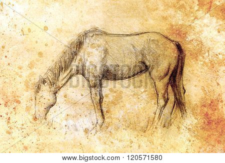Draw pencil horse on old paper, vintage paper and old structure with color spots.