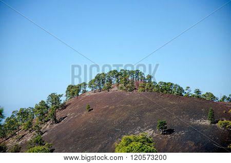 Trees On Volcanic Hillside In Tenerife, Spain