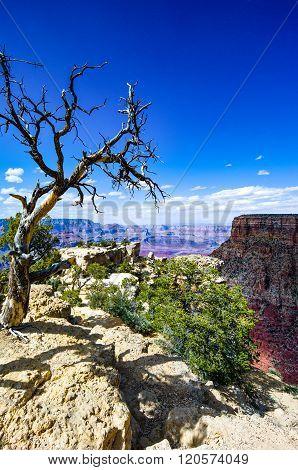 U.S.A. Arizona, the Grand Canyon South Rim.