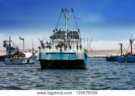 birds on board vessels fishing ship