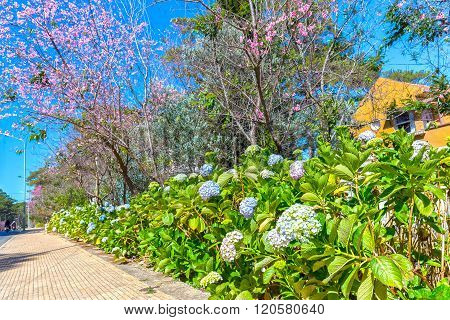 Spring flower road