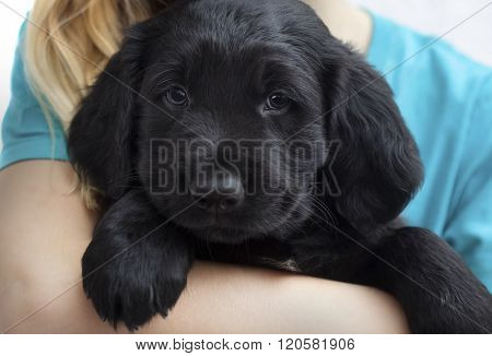 girl with puppy dog, close up