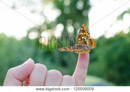 Butterfly On Little Finger