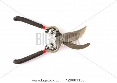 Gardening  Secateurs