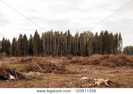 Landscape After Destruction Of The Wood