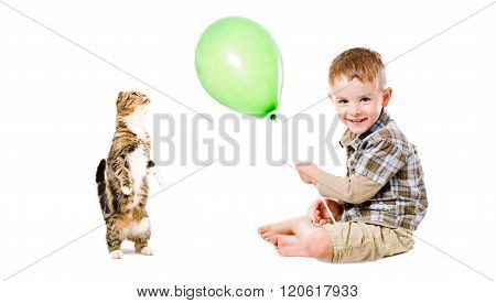 Happy child and curious cat Scottish Fold