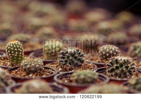 Different Cacti In Orangery