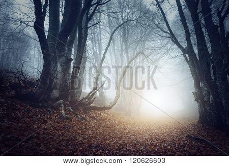 Scary Mysterious Forest In Fog In Autumn. Magic Trees