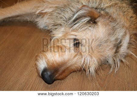 a dog lies on its side on the floor