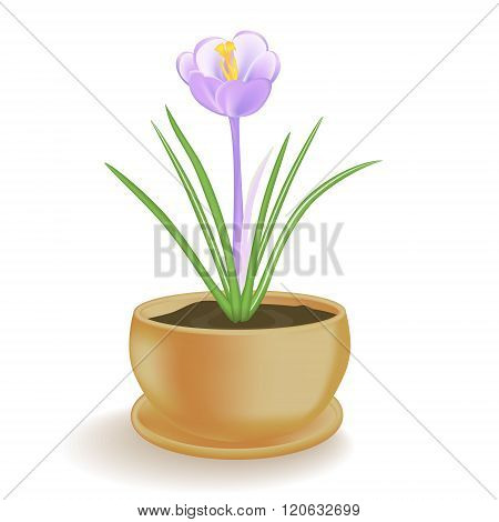 Spring Flower In A Flowerpot On White Background.